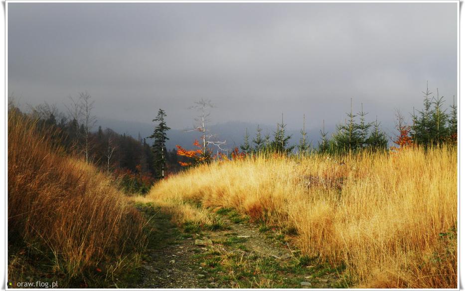 W trawach złocistych puchata Jesień ….....