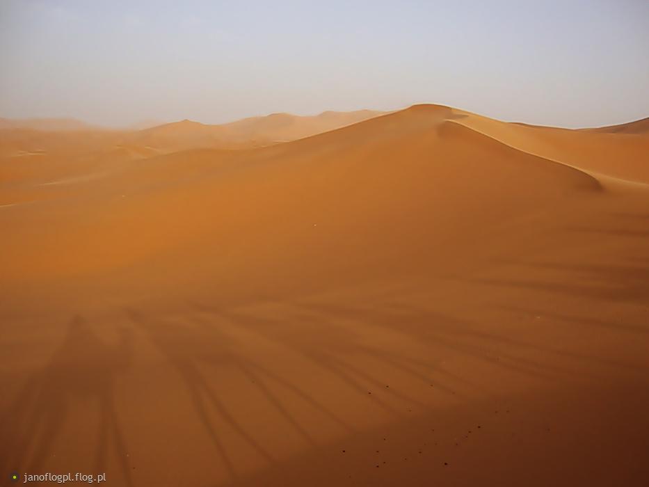 Takie sobie cienie na piasku