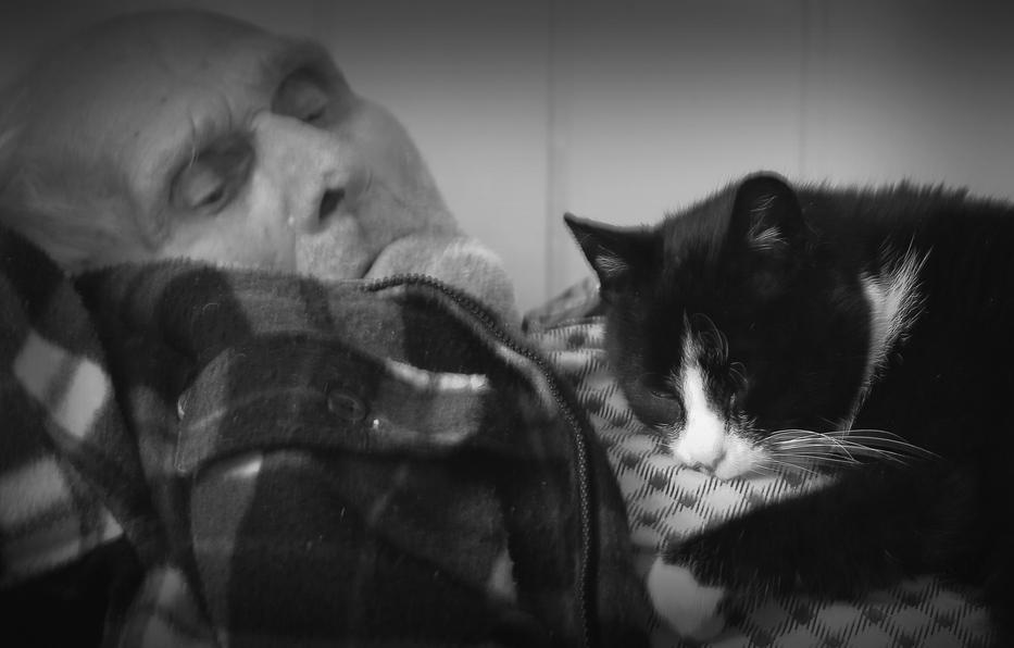 Jego przyjaciel kot...