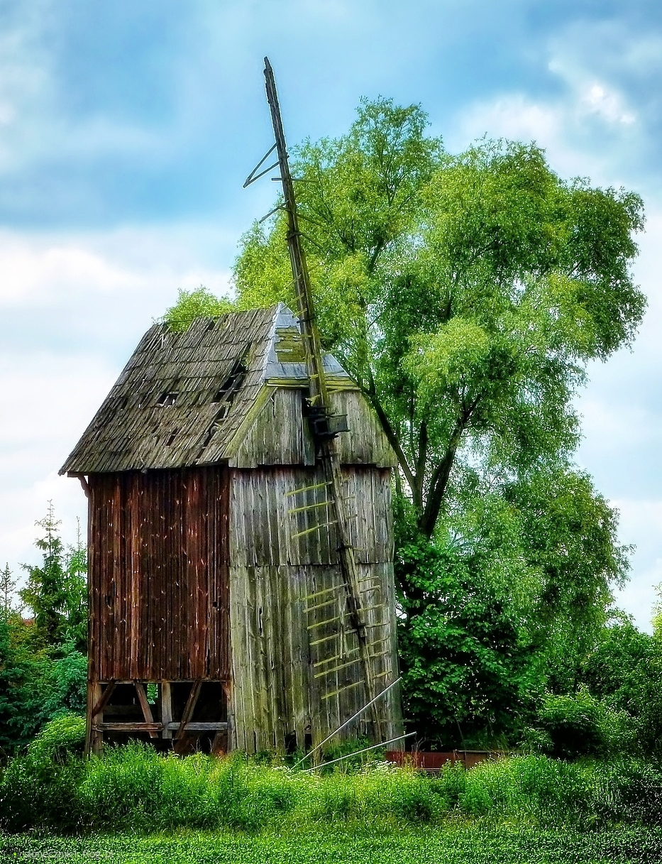 Ginące krajobrazy  - mieszkowski wiatrak