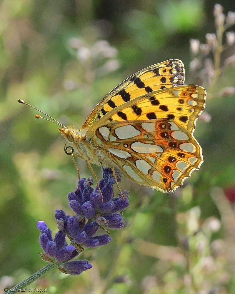 ... serca motyli przybliż i przytul ...
