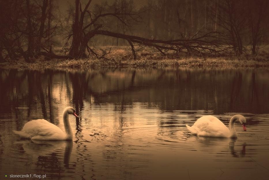 ... piękne tajemne ptaki ...