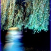 Magia nocnych wędrówek...<br /> księżycowa droga otulona<br /> gwiezdnym pyłem....Przyg<br />odo trwaj.