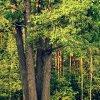 Bo las jest wielką miłośc<br />ią Twą ... ::  Natura jest świątynią, k<br />ędy słupy żyweNiepojęte n<br />am słowa wymawiają czasem<br />.Człowiek wśr�