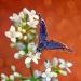 kolory lata wspominam....i łapię je malując obraz motyla:)
